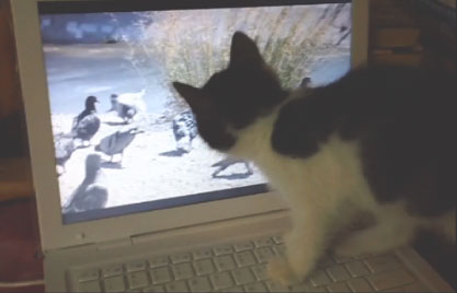Kittens are engaged by the vivid details