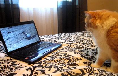 A tabby loves her movie